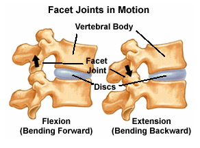 Facet Joints in Motion Pain Doctor Fort Lauderdale