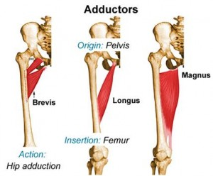 Adductor Tendinitis Jonathan Aarons Md Pain Management